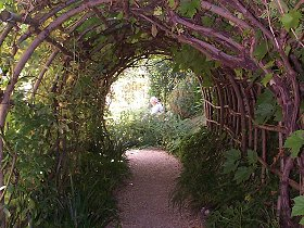 A view through the Vine Arch